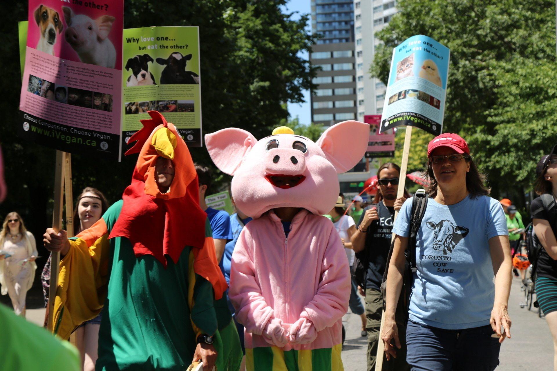 Chick-fil-A's 'Cow Mascot' Moos Veganism